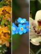 références de fleurs et feuilles